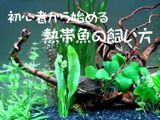 初心者から始める熱帯魚の飼い方